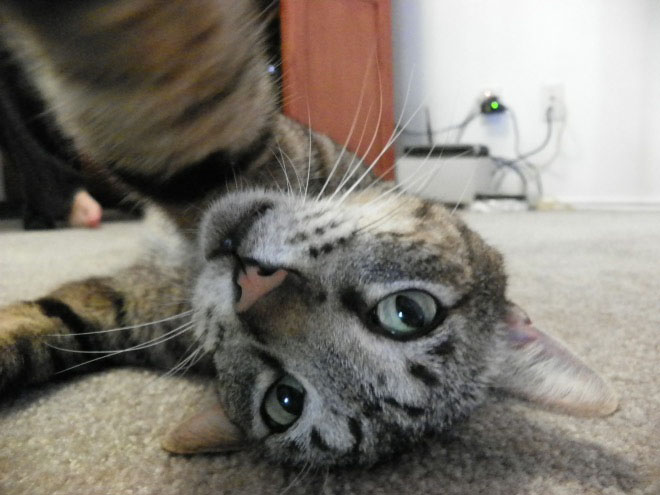 cats-taking-selfies-11