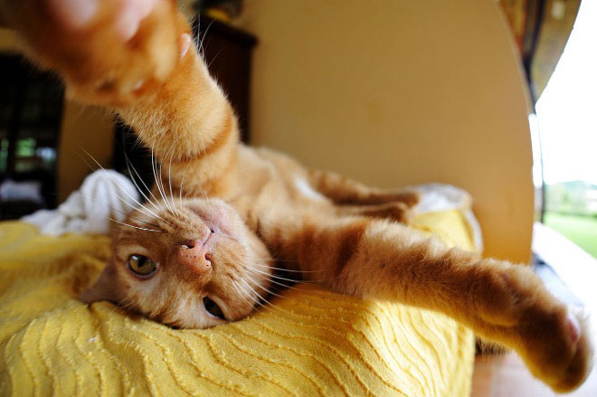 cats-taking-selfies-12