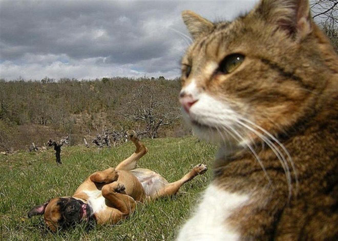 cats-taking-selfies-15
