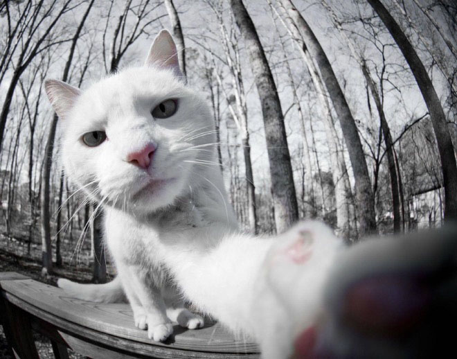 cats-taking-selfies-8