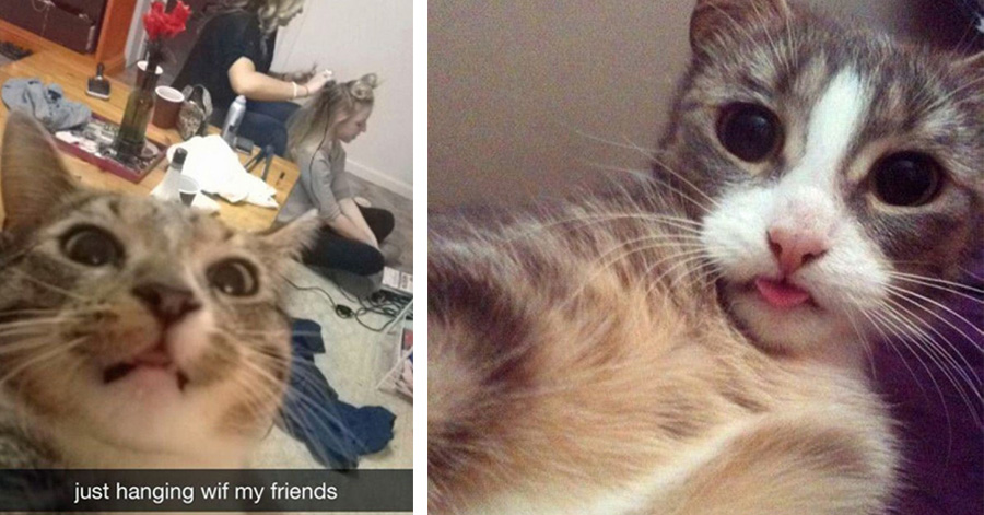 The Funniest Pictures Of Animals Posing For A Selfie - 24 hilarious photos cats posing like pin girls
