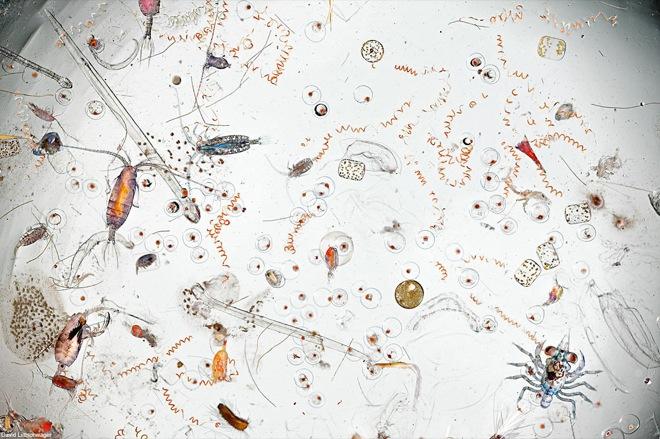 drop-of-seawater