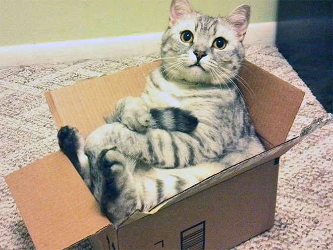 hilarious-cats-sitting-awkwardly-3
