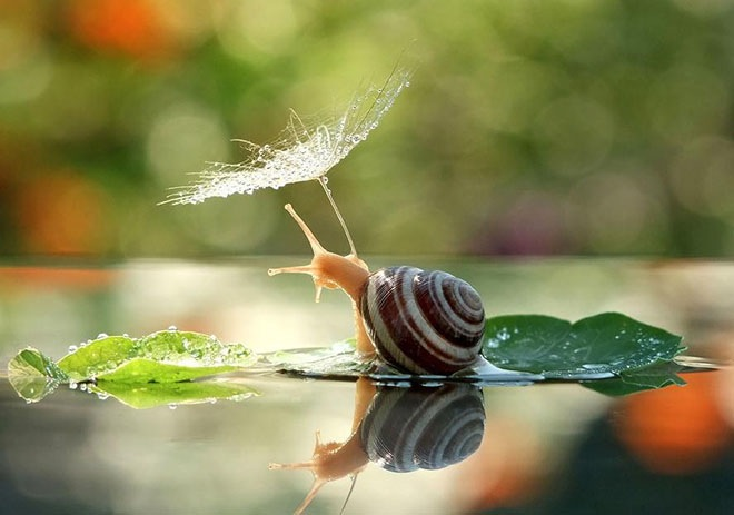magical-photos-of-snails-1
