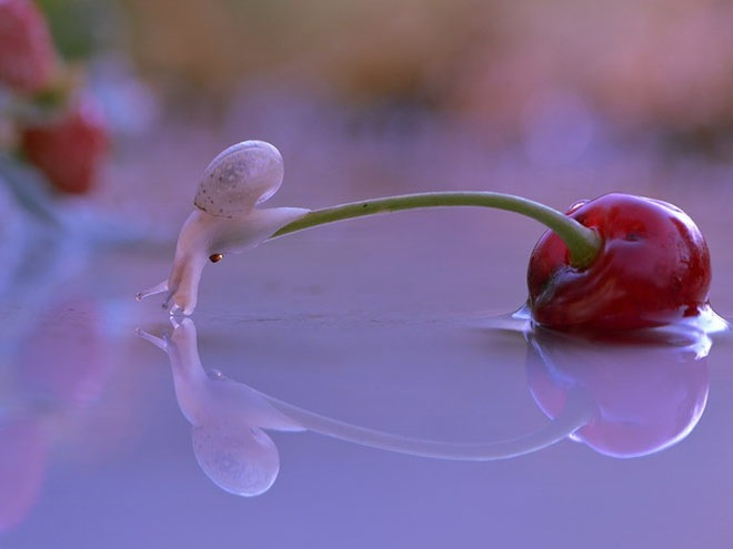 magical-photos-of-snails-10
