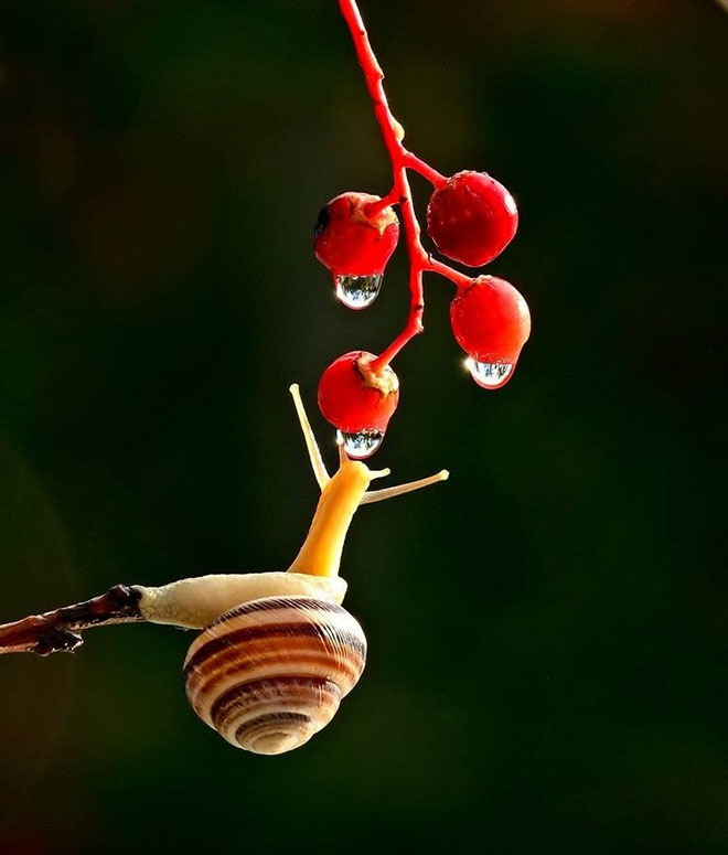 magical-photos-of-snails-12