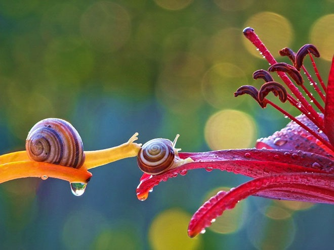 magical-photos-of-snails-14