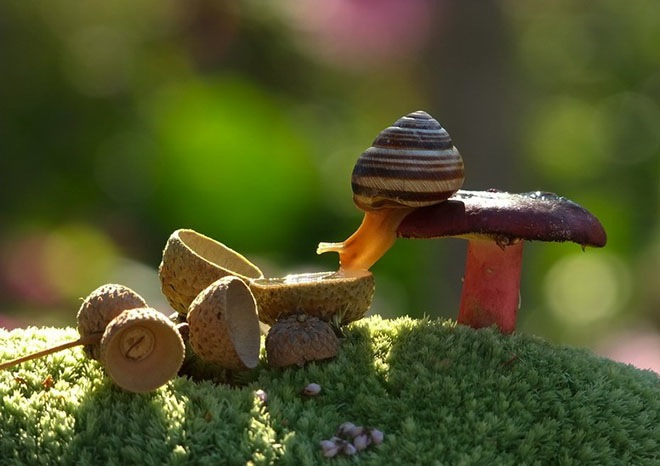 magical-photos-of-snails-15