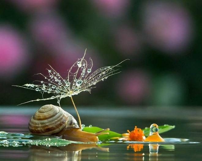 images of snails