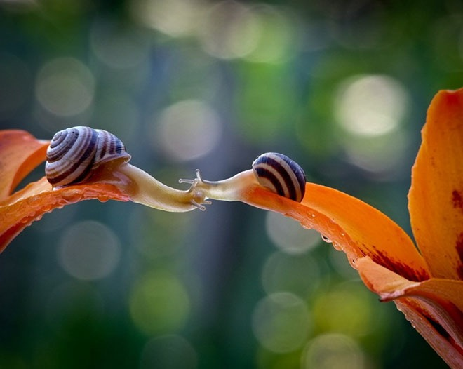 magical-photos-of-snails-17