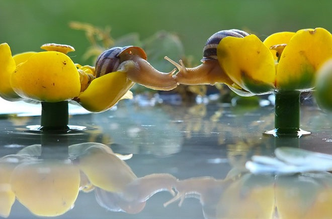 magical-photos-of-snails-18