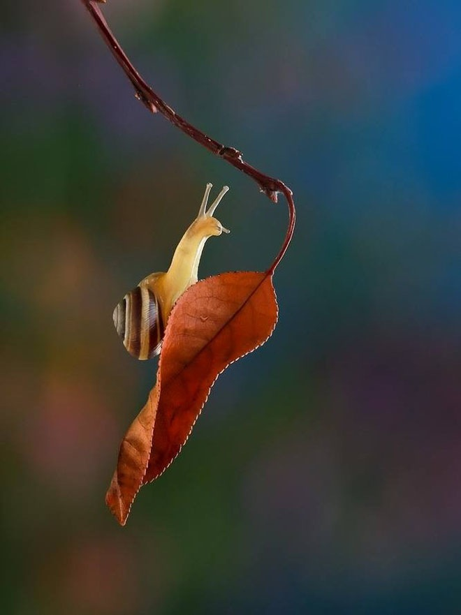 magical-photos-of-snails-19