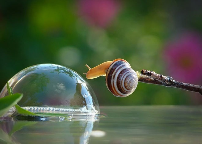 magical-photos-of-snails-2