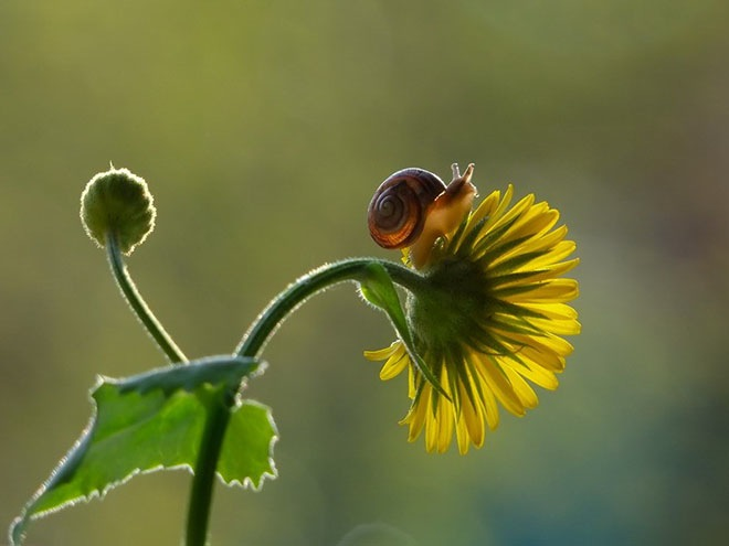 magical-photos-of-snails-20