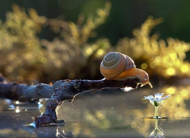 magical-photos-of-snails-3