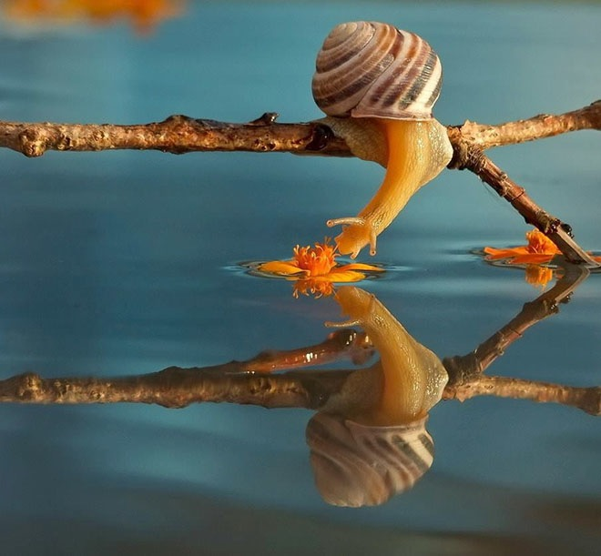 magical-photos-of-snails-4