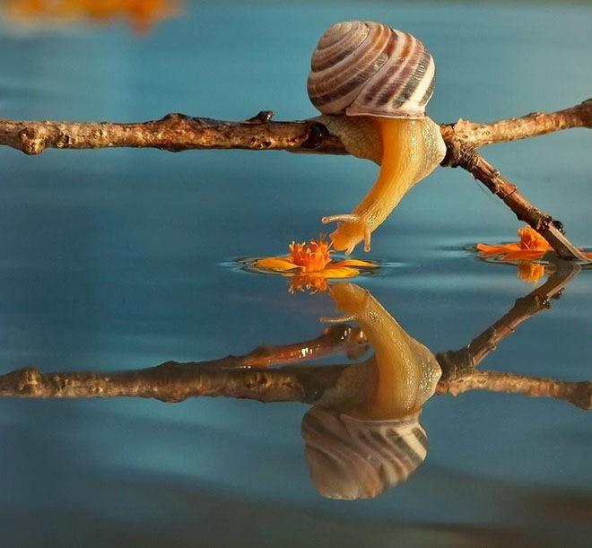 magical-photos-of-snails-4