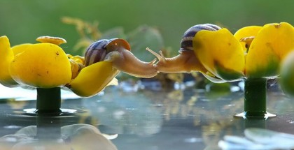 magical-photos-of-snails