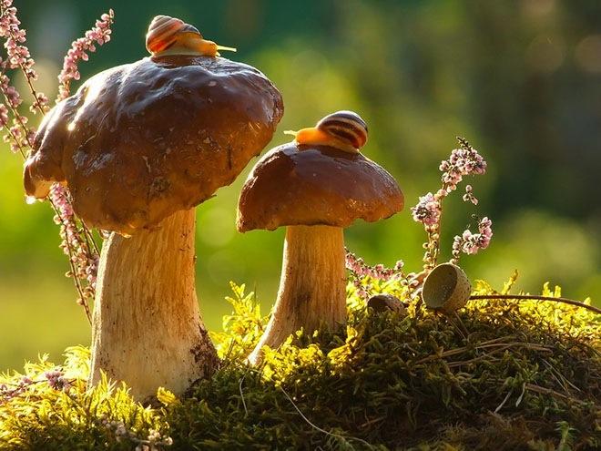 magical-photos-of-snails-5