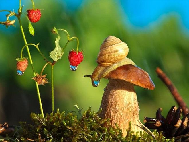 magical-photos-of-snails-6