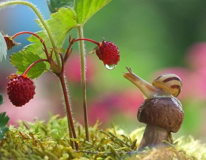 magical-photos-of-snails-7