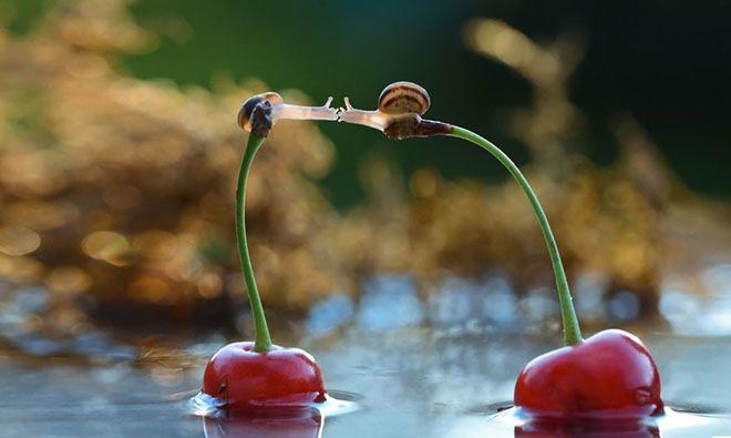 magical-photos-of-snails-8