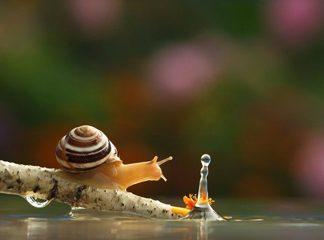 photos of snails