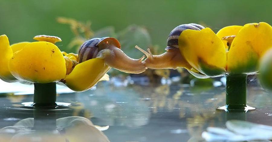 magical-photos-of-snails