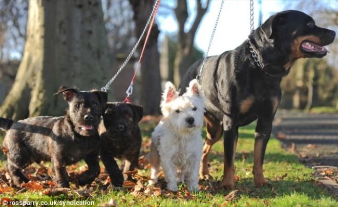 terrier-and-rottweiler-2
