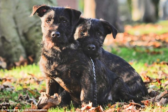 terrier-and-rottweiler-3