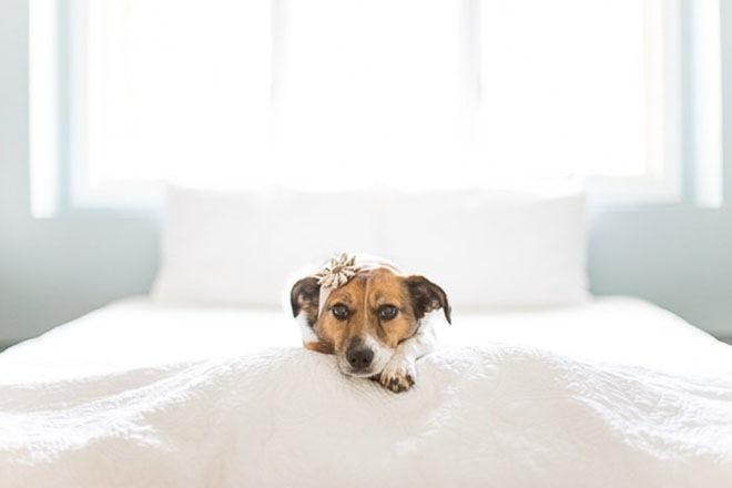 baby-dog-photoshoot-1