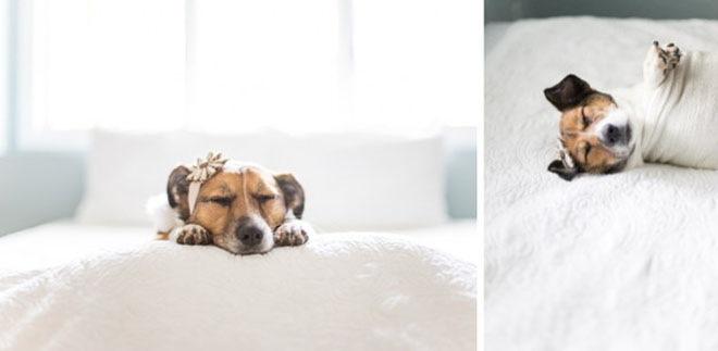 baby-dog-photoshoot-10