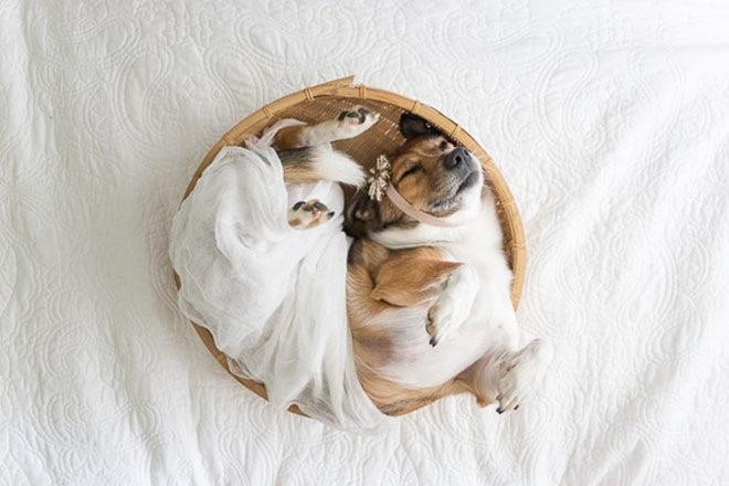 baby-dog-photoshoot-5
