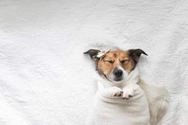 baby-dog-photoshoot-6