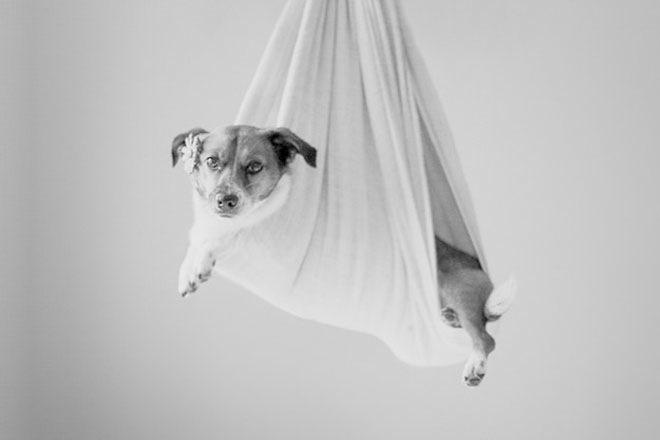 baby-dog-photoshoot-7