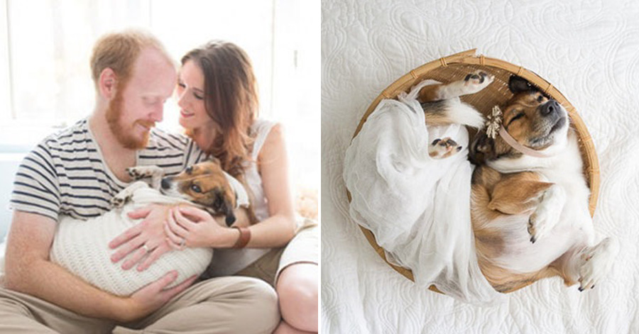 This Couple Took The Most Unusual Of Newborn Photoshoots With Their Dog Result Made My Day