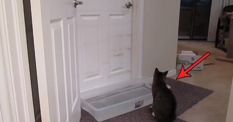 cat-secret-talent