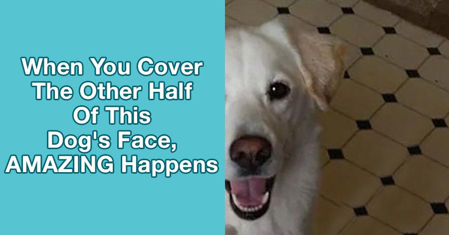 dog-chimerism