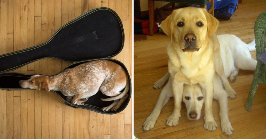 Dogs Archives Page Of Just Something Creative - 15 times dogs realized they were going to the vet instead of the park their reactions are priceless