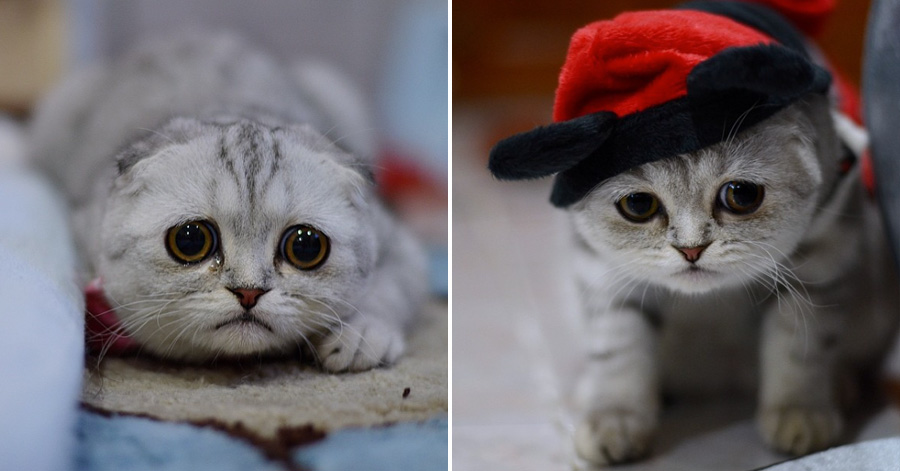 Meet Little P, The Most Adorably Sad Cat Of Instagram