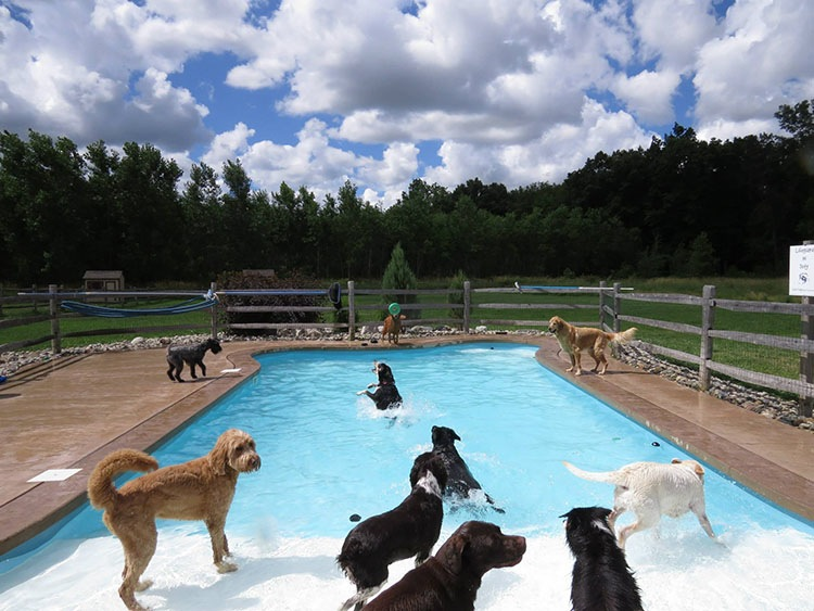 pool-pawty-1