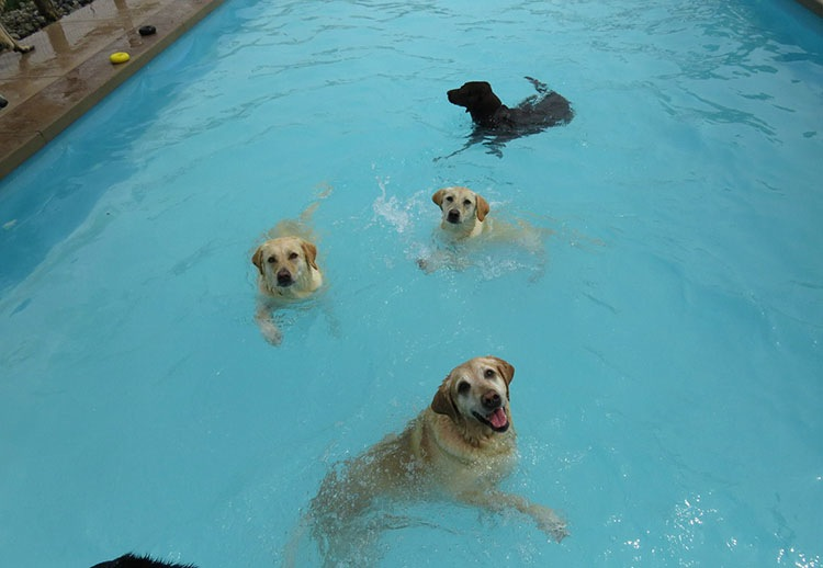 pool-pawty-4