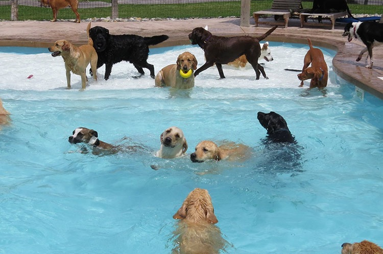 pool-pawty-5