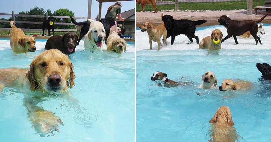 pool-pawty