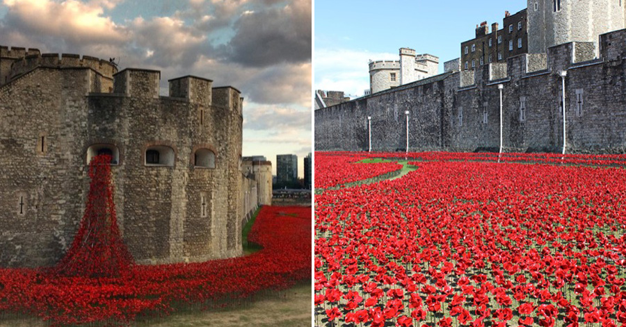Poppies Pour Like A River Of Blood From The Tower Of - Tower of london river of poppies