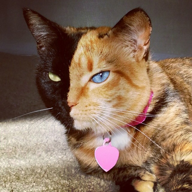 Amazing Cat: This Is Venus, The Most Amazing Cat In The World