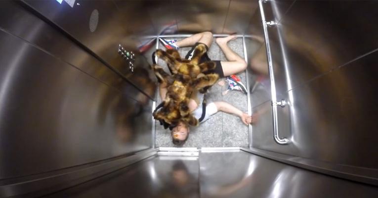 dog-giant-spider-prank