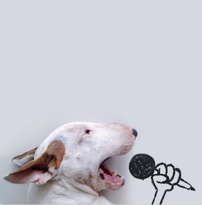 dog-illustrations-10