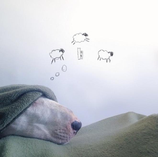 dog-illustrations-12