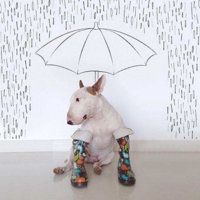 dog-illustrations-14
